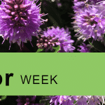 national pollinator week celebrated by parks and recreation organizations